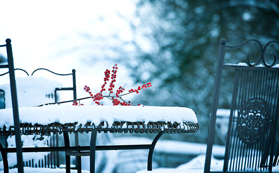 Bild Garten im Winter