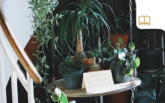 Magazinbeitrag Indoorgarten
