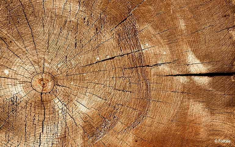 Holzschimmel